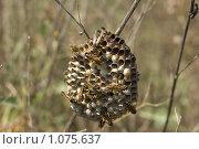 Осиное гнездо. Стоковое фото, фотограф Виктор Косьянчук / Фотобанк Лори