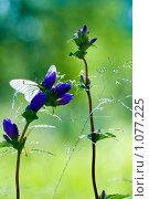 Бабочка. Стоковое фото, фотограф Артём Картушин / Фотобанк Лори