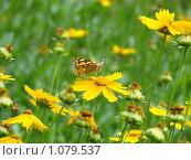 Бабочка на цветке. Стоковое фото, фотограф Стрельченко Сергей / Фотобанк Лори