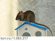 Купить «Домик для крысы», фото № 1083317, снято 10 сентября 2009 г. (c) Яна Королёва / Фотобанк Лори