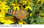 Бабочка. Стоковое фото, фотограф Дмитрий Горбик / Фотобанк Лори