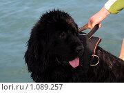 Купить «Мокрый пес», фото № 1089257, снято 9 сентября 2009 г. (c) Вера Тропынина / Фотобанк Лори