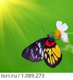 Купить «Бабочка», фото № 1089273, снято 5 августа 2009 г. (c) Ольга Хорошунова / Фотобанк Лори