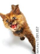 Купить «Котенок», фото № 1091857, снято 12 сентября 2008 г. (c) Константин Тавров / Фотобанк Лори