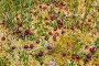 Клюква растет на болоте, фото № 1092957, снято 24 августа 2009 г. (c) FotograFF / Фотобанк Лори