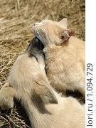 Кот и пёс. Стоковое фото, фотограф Лена Лазарева / Фотобанк Лори