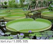 Ботанический сад. Стоковое фото, фотограф Сотникова Екатерина / Фотобанк Лори
