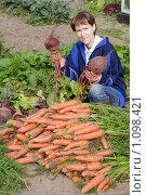 Купить «Урожай», эксклюзивное фото № 1098421, снято 13 сентября 2009 г. (c) Мария Зубарева / Фотобанк Лори