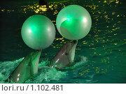 Купить «Дельфины», фото № 1102481, снято 20 августа 2009 г. (c) Литова Наталья / Фотобанк Лори