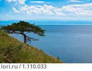 Одинокая сосна на склоне около Байкала. Стоковое фото, фотограф Андрей Мелкозеров / Фотобанк Лори