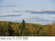 Осенний лес. Стоковое фото, фотограф Виктор Агеев / Фотобанк Лори