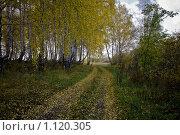 Осенний лес.Дорога. Стоковое фото, фотограф Виктор Ковалев / Фотобанк Лори