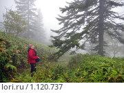 Купить «Девушка в утреннем туманном лесу», фото № 1120737, снято 24 сентября 2009 г. (c) RedTC / Фотобанк Лори
