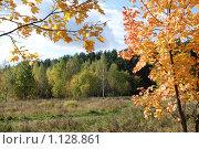 Купить «Осень», фото № 1128861, снято 3 октября 2009 г. (c) Екатерина Овсянникова / Фотобанк Лори