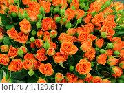 Купить «Большой букет из распускающихся роз», фото № 1129617, снято 16 августа 2018 г. (c) Лебедев Максим / Фотобанк Лори
