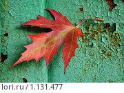 Красный лист на зеленой фактуре. Стоковое фото, фотограф Виталий Гречко / Фотобанк Лори