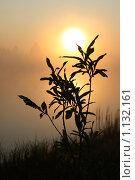 Купить «Силуэт ветки вербы на фоне утреннего солнца и тумана», эксклюзивное фото № 1132161, снято 26 августа 2009 г. (c) Григорий Писоцкий / Фотобанк Лори