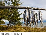 Байкальский омуль. Стоковое фото, фотограф Ипполитов Александр / Фотобанк Лори