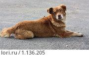 Бездомный пёс. Стоковое фото, фотограф Толкачёв Евгений / Фотобанк Лори