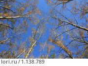 Стремятся к небу. Стоковое фото, фотограф Наталья Хваткова / Фотобанк Лори