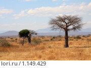 Африканский пейзаж: саванна с тонким баобабом. Стоковое фото, фотограф Димитрий Сухов / Фотобанк Лори