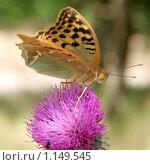 Бабочка на цветке. Стоковое фото, фотограф Виктор Пашин / Фотобанк Лори