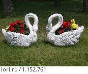 Лебеди. Стоковое фото, фотограф Дмитрий Горбик / Фотобанк Лори