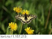 Бабочка. Стоковое фото, фотограф Никитина Жанна / Фотобанк Лори