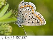 Купить «Серая в крапинку бабочка сидит на траве», фото № 1157257, снято 3 июля 2009 г. (c) Алексей Бок / Фотобанк Лори