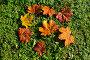 Осенние листья, фото № 1158081, снято 16 октября 2009 г. (c) Литова Наталья / Фотобанк Лори