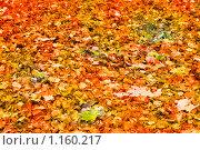 Купить «Желтые оранжевые красные опавшие листья», фото № 1160217, снято 12 октября 2008 г. (c) Александр Косарев / Фотобанк Лори