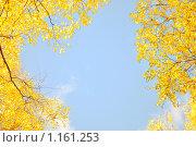 Рамка из осенних листьев. Стоковое фото, фотограф Анфимов Леонид / Фотобанк Лори