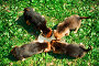 Кормление щенят, фото № 1161729, снято 18 мая 2008 г. (c) Евгений Захаров / Фотобанк Лори