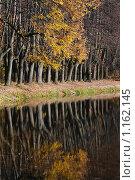 Аллея осенью. Стоковое фото, фотограф Екатерина Воякина / Фотобанк Лори
