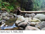 Горная река. Стоковое фото, фотограф Гордиенко Олег / Фотобанк Лори
