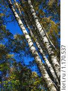 Купить «Осенний лес», эксклюзивное фото № 1170537, снято 7 октября 2009 г. (c) lana1501 / Фотобанк Лори