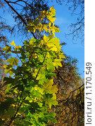 Купить «Осенний лес», эксклюзивное фото № 1170549, снято 7 октября 2009 г. (c) lana1501 / Фотобанк Лори