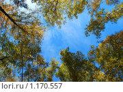 Купить «Веточки с листиками на фоне неба», эксклюзивное фото № 1170557, снято 7 октября 2009 г. (c) lana1501 / Фотобанк Лори