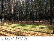 Купить «Осень», фото № 1171109, снято 15 октября 2009 г. (c) Наталья Белотелова / Фотобанк Лори