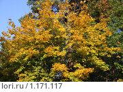 Купить «Осень», фото № 1171117, снято 15 октября 2009 г. (c) Наталья Белотелова / Фотобанк Лори