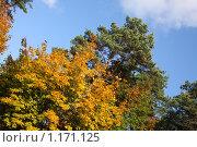 Купить «Осень», фото № 1171125, снято 15 октября 2009 г. (c) Наталья Белотелова / Фотобанк Лори