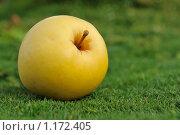 Купить «Желтое яблоко на зеленой траве», фото № 1172405, снято 13 сентября 2009 г. (c) Дмитрий Калиновский / Фотобанк Лори