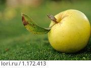 Купить «Желтое яблоко на зеленой траве», фото № 1172413, снято 13 сентября 2009 г. (c) Дмитрий Калиновский / Фотобанк Лори