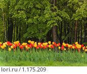 Цветы. Стоковое фото, фотограф Климонтова Александра / Фотобанк Лори