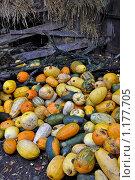 Осенний натюрморт. Стоковое фото, фотограф Павлов Борис / Фотобанк Лори