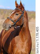 Купить «Портрет рыжей спортивной лошади», фото № 1178405, снято 15 октября 2009 г. (c) Титаренко Елена / Фотобанк Лори