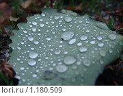 Купить «Осень», фото № 1180509, снято 5 сентября 2009 г. (c) Хорольская Екатерина / Фотобанк Лори