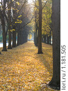 Купить «Ряд деревьев в парке, осенью», фото № 1181505, снято 18 октября 2009 г. (c) Алексей Росляков / Фотобанк Лори