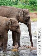 Купить «Слоны на водопое. Шри Ланка», фото № 1182905, снято 4 августа 2009 г. (c) Алексей Кузнецов / Фотобанк Лори
