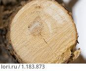 Купить «Спиленное дерево», фото № 1183873, снято 28 февраля 2009 г. (c) Вячеслав Рящиков / Фотобанк Лори